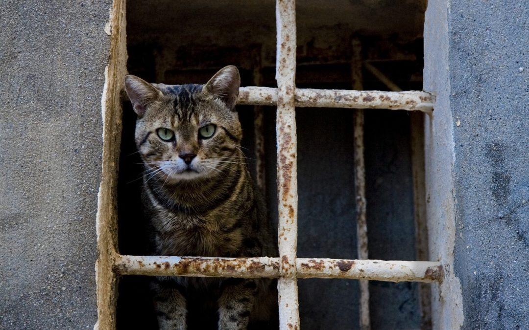 clinique vétérinaire animalia ttikiak animal errant