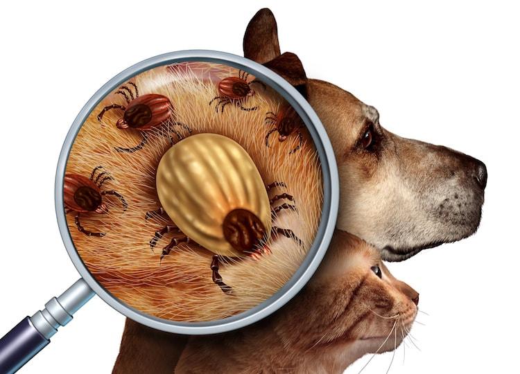 Protéger ses animaux contre les parasites